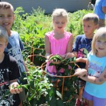 Handfuls of hot peppers were harvested from GRMC's Giving Garden by the GRMC Daycamp youth.