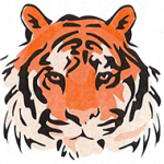 tiger_white_bkgd2-150x150
